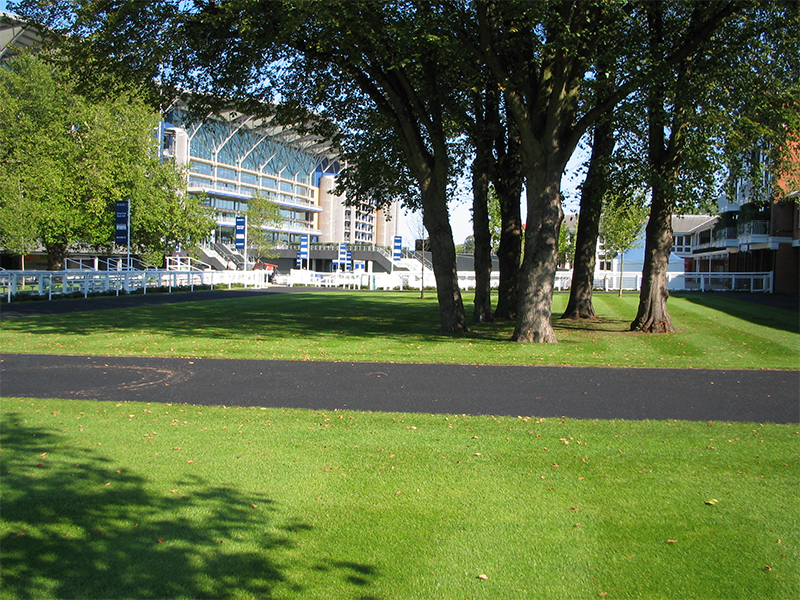Lawn at Ascot Racecourse