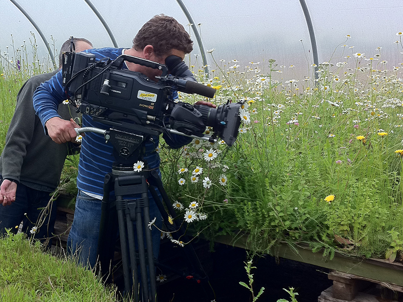 BBC filming the flowers at Chelsea Flower Show