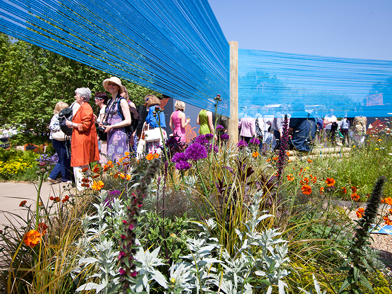 Wildflower garden at Chelsea Flower Show