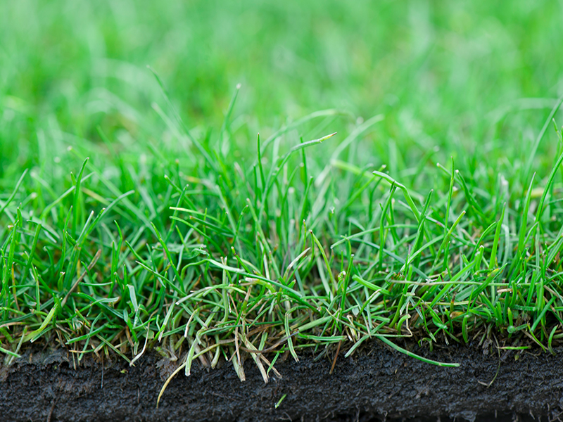 Cutting of grass